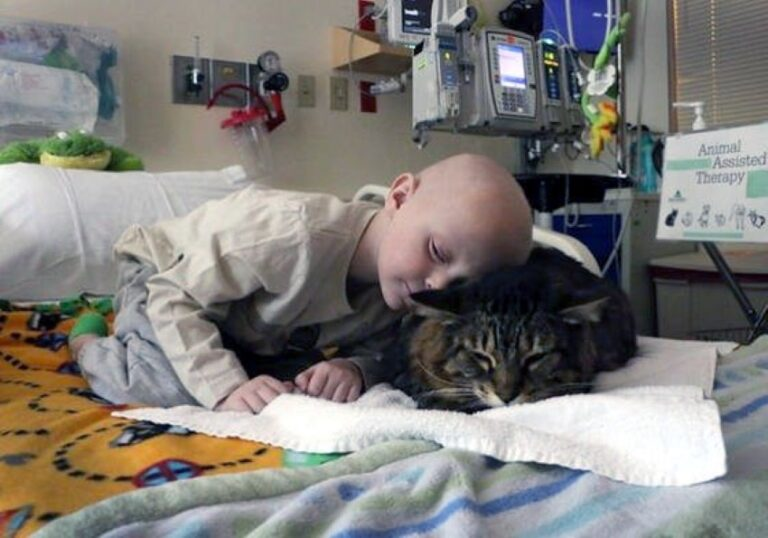 Il potere curativo dei gatti