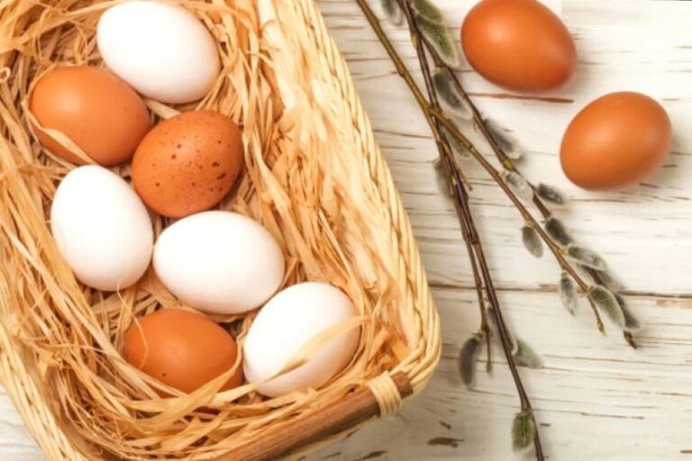 Un uovo al giorno a colazione previene l'Alzheimer
