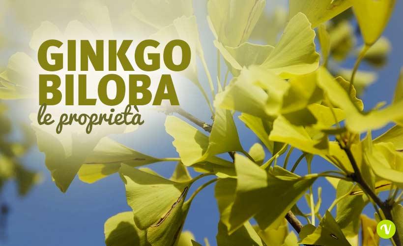Ginkgo biloba benefici e utilizzo