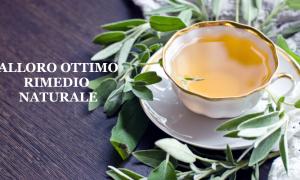 Tisana alloro e zenzero, potente rimedio naturale